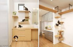 The Japanese company studied cat and human interaction before coming up with the design for a perfect cat home