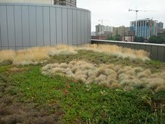 Seattle Justice Center green roof