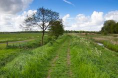 Natuurgebied Friescheveen (4km) http://wandelenrondroden.nl/korte-routes-1-5km/wandelroutes/1-5km/natuurgebied-friescheveen-4km  Een korte wandelroute door het natuurgebied Friescheveen bij landgoed Vennebroek in Eelde-Paterswolde. Vooral in het voorjaar is dit gebied rijk aan vogels, kikkers en andere dieren, maar ook in andere jaargetijden is dit gebied de moeite waard. Langere routes zijn beschikbaar op onze website.