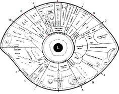 Free Iridology Eye Chart Downloads | Large Iridology Chart