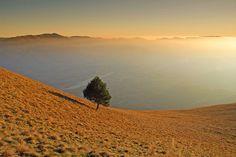El Pez mael ( Pino solitario) sul monte Serva, sullo sfondo il Col Visentin Belluno Dolomiti Veneto Italia foto Walter Scarella