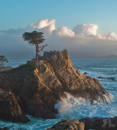 'The Lone Cypress', on the Monterey Peninsula, Monterey, California