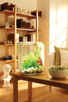 Our site includes useful information on how to get the best betta tank for your new fish and how to care for betta fish. Betta Aquarium, Nano Aquarium, Aquarium Design, Aquarium Ideas, Biorb Fish Tank, Indoor Water Features, Cool Fish Tanks, Betta Fish Tank, Glass Pool