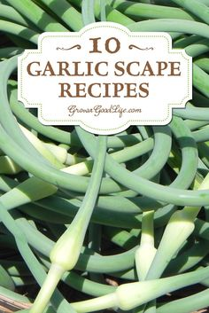 The garlic scape is edible and has a lovely, mild garlic flavor with a hint of sweetness. The scape is most tender, with almost an asparagus-like texture when it is curling.