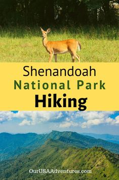 Shenandoah National Park offers some of the best hiking on the east coast. From beautiful waterfalls to stunning mountaintop views hikers of all levels can enjoy. Shenandoah National Park, Shenandoah Valley, Usa Places To Visit, Largest Waterfall, Waterfall Hikes, Colorado Hiking, Us National Parks, All Nature, Beautiful Waterfalls