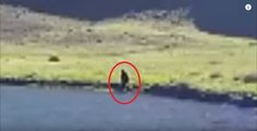 Analysis of footage from WIldhorse lake Oregon claiming to show Bigfoot. What do you think? THIS WEBCAST IS UNCEN. Bigfoot Footage, Bigfoot Sightings, Bigfoot Sasquatch, Mystery, Creatures