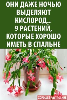 Life Hackers, House Plants, Planting Flowers, Greenery, Garden Design, Flora, Home And Garden, Nutrition, House Styles