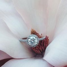 Beautiful Ritani ring on a magnolia by heykreej on Instagram.