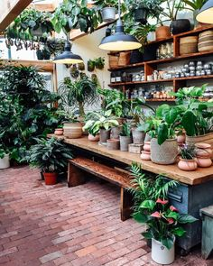 24 Plant Shops that Will Attract Any Plant Lover - Dalla Vita,Pistils Nursery. - 24 Plant Shops that Will Attract Any Plant Lover – Dalla Vita, Greenhouse Plans, Greenhouse Gardening, Backyard Greenhouse, Greenhouse Wedding, Balcony Garden, Garden Plants, Garden Shop, Home And Garden, Tiny Garden Ideas