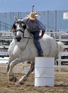Percheron barrel racing