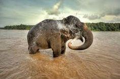 Resultado de imagen para el reino de los elefantes