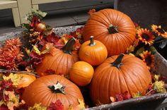 Crate O' pumpkins