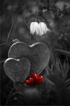 Splash of Color Black And White Pictures, Red And White, Color Splash, Color Pop, Red Color, Heart Images, I Love Heart, Jolie Photo, Heart Art