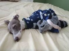 Once You See These 28 Animals And Their Tiny Best Friends, Your Heart Will Burst