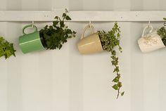 Very cute hanging garden.