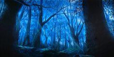 Into The Woods Scenic Backdrop | TheatreWorld