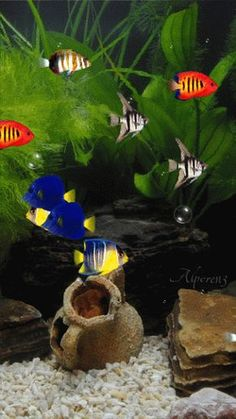 All your beautiful gifs in one place Colorful Fish, Tropical Fish, Fish Gif, Gif Photo, Beautiful Gif, Animation, Ocean Creatures, Gif Pictures, Apple Wallpaper