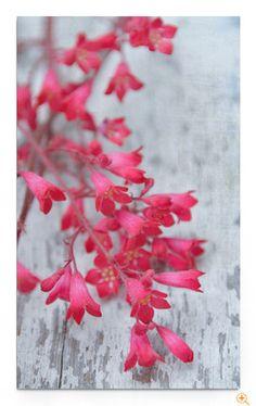 """""""Coral"""" von Iris Lehnhardt"""