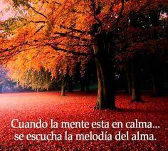 Alex Villar: Cuando la mente está en calma... se escucha la melodía del alma.