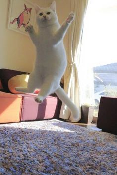 「ミルコ 重力無視で跳ねてます」のYahoo!検索(リアルタイム) - Twitter(ツイッター)、Facebookをリアルタイム検索