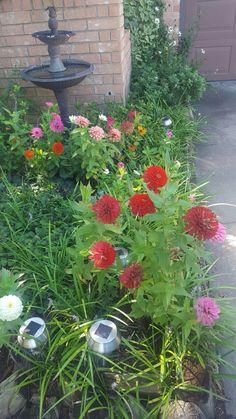 Arkansas Garden