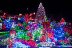 25 best zoolights images aquarium aquarium fish aquarius rh pinterest com