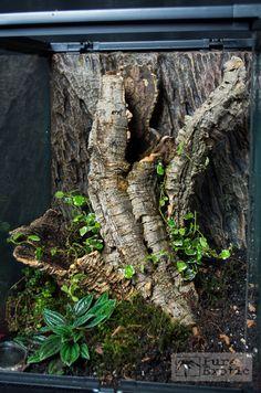Terrarium Encyocratella olivacea Reptile House, Reptile Habitat, Reptile Room, Reptile Cage, Bartagamen Terrarium, Terrarium Reptile, Tarantula Enclosure, Reptile Enclosure, Paludarium