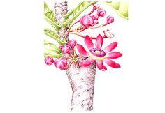 Ilustración. Botanical Illustration, Botanical Prints, Illustration Art, Kew Gardens, Botany, Still Life, Planting Flowers, Drawings, Floral
