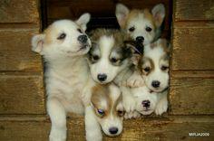 Puppies erasusi.com