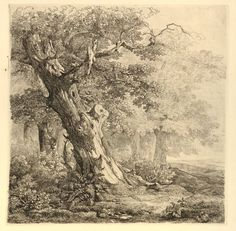 Remigius Adrianus van Haanen, Scene on the edge of a forest with a large tree in the foreground, 1848, Etching