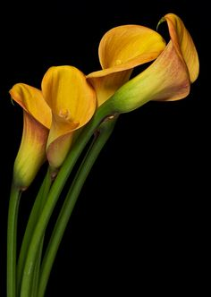 """Floral Gold"" by Anthony W S Soo on 500px"