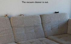 Beware Of Funny Animals With Captions - 22 Pics