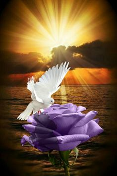 Gorgeous sunrise wallpaper a nice day Dove Images, Dove Pictures, Jesus Pictures, Flower Phone Wallpaper, Flower Wallpaper, Cool Optical Illusions, Beautiful Nature Pictures, Good Night Greetings, Romantic Flowers