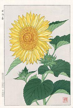 Antique prints from Shodo Kawarazaki Spring Flower Woodblock Prints Sunflower Illustration, Botanical Illustration, Illustration Art, Illustrations, Japanese Painting, Japanese Art, Chinese Painting, Chinese Art, Tattoo Fleur