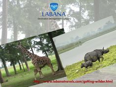 Come to the land of opulence, India and explore the exotic and quixotic wildlife in the country with exclusive wildlife tours in India http://www.labanatravels.com/getting-wilder.html