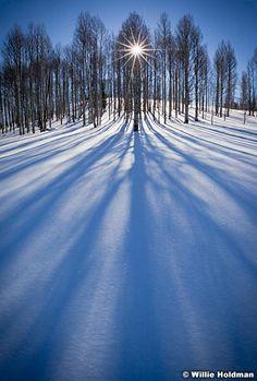 Sunburst through aspens, snow, winter with long shadows on   snowy meadow near deer valley, Utah favorite.  willieholdman.com