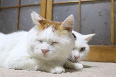 しろのかげ - かご猫 Blog