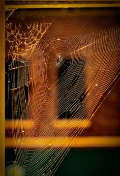 Spider Web,,,isn't it amazing....