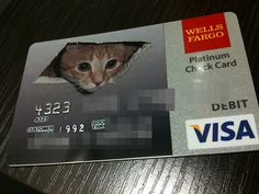 16 Best Of Business Line Of Credit Vs Credit Card Photography - The fact is, on many occasions you find the need to use invitation cards and even Debit Card Design, Bank Card, S Pic, Cool Cards, Invitation Cards, Animal Pictures, Funny Pictures, Wellness, Humor
