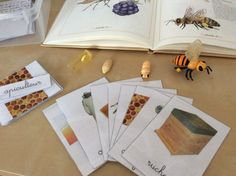 Butterfly Life Cycle, Zoology, Bee, Children, Home