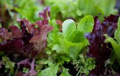 Growing fresh and delicious vegetables in your own back yard or on your deck or patio is easier than you think. Easy Vegetables To Grow, Fall Vegetables, Veggies, Organic Gardening, Gardening Tips, Vegetable Gardening, Veggie Gardens, Cherry Tomato Plant, How To Cook Greens