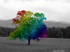Rainbow trees | in time of silver rain the earth puts forth life again green grasses ...
