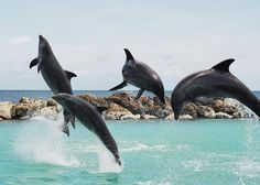 Playing with Dolphins at Curacao Island.