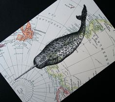 Narwhal Print on Arctic Map - 5 x 7 North Pole and Greenland Narwhal Map Print
