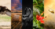Choose from five great photos and vote for your favourite Photo of the Month!