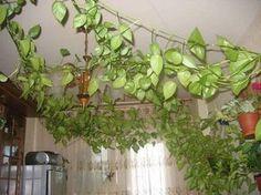 Pflanzen Feng Shui Wohnzimmer Dekorieren Arten Positive Energie