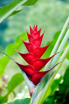 Ever wondered what the strangest flowers may look like? At Appleyard London, we have put together a list of the 5 most unusual flowers in the world for you. Unusual Flowers, Rare Flowers, Amazing Flowers, Beautiful Flowers, Lilies Flowers, Purple Flowers, Hawaiian Flowers, Tropical Flowers, Cactus Flower