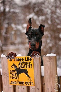 We need this sign, but with a Great Dane on it Hee,hee ;-D
