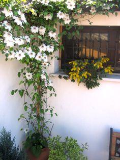 Compagnia del Giardinaggio: Il fascino delle Clematis, tra grazia e versatilità