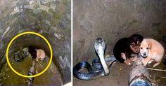 Dos cachorritos cayeron a un hoyo donde estaba una cobra, luego ocurrió algo increíble
